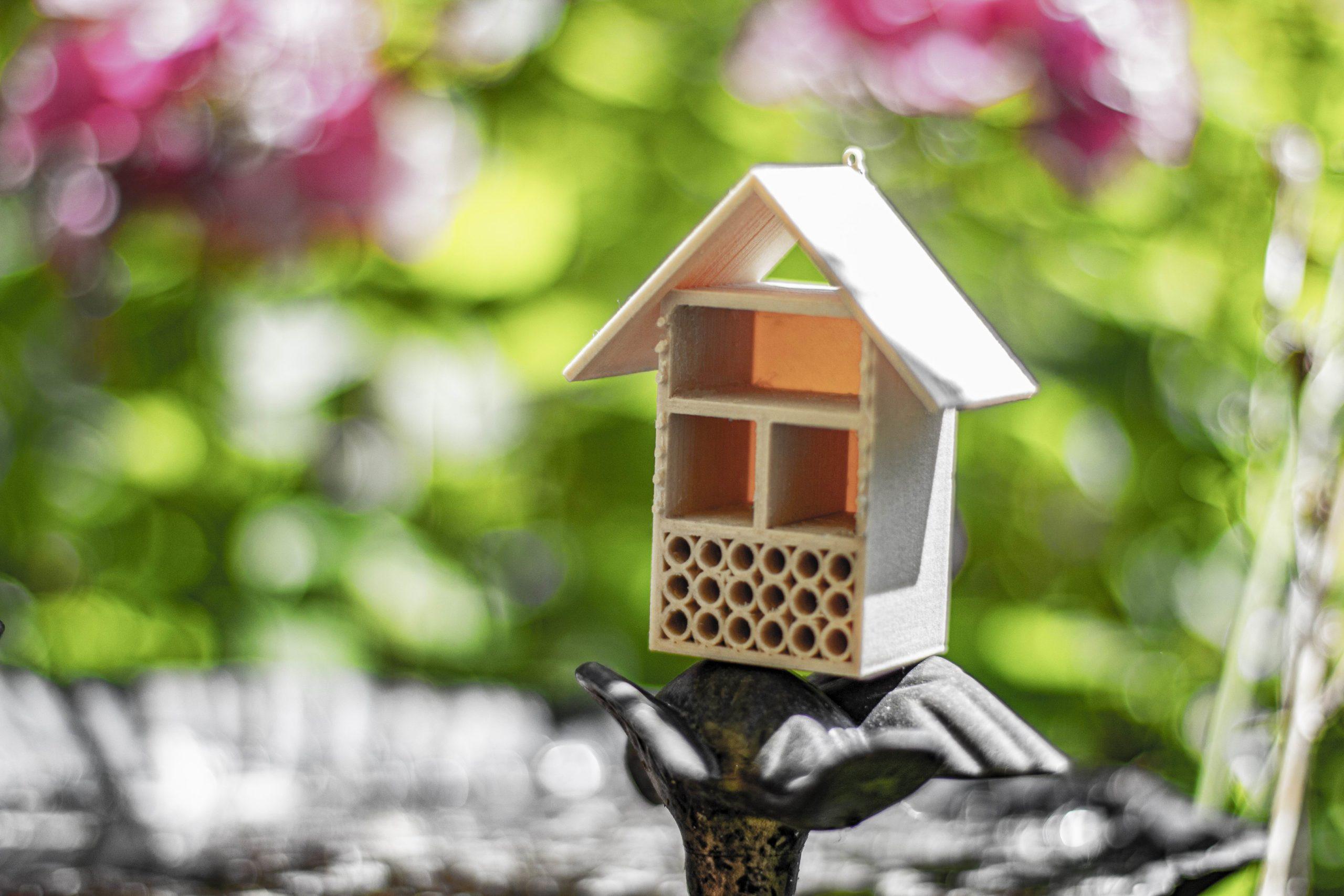 Domeček pro hmyz 1